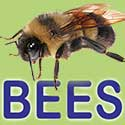 Wisconsin Native Bees Search